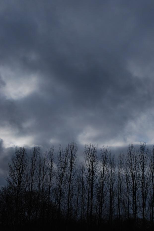 Desolation crows.